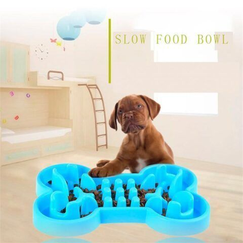 Slow Food Bowl